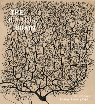 Beautiful Brain The Drawings of Santiago Ramon y Cajal