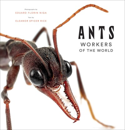 Ants Workers of the World