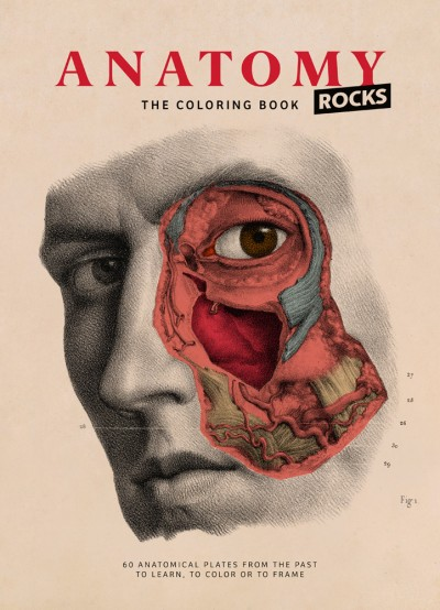 Anatomy Rocks The Coloring Book