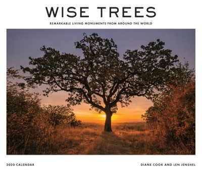 Wise Trees 2020 Wall Calendar Remarkable Living Monuments from Around the World