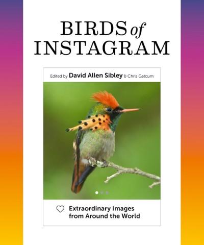 Birds of Instagram Extraordinary Images from Around the World