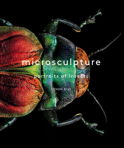 Microsculpture Portraits of Insects